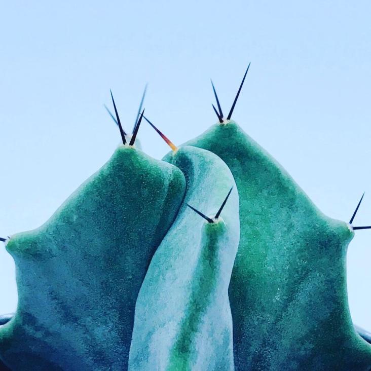 Cactus stenocereus pruinosus