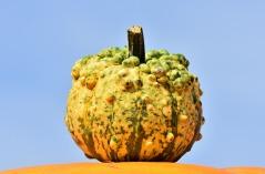 pumpkin-3664582_1920