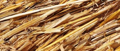 straw-1529063_1920
